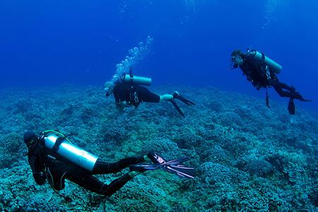Maui Scuba Diving Tours