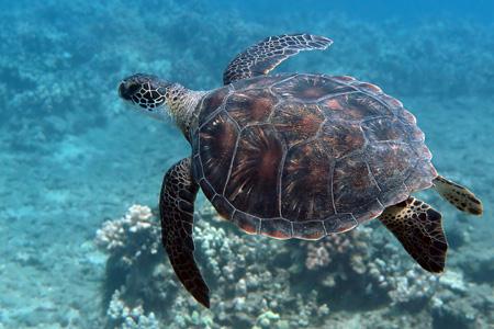 Professional Underwater Photography
