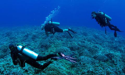 Maui Scuba Diving Private Tours