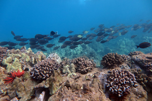 wailea point scuba diving