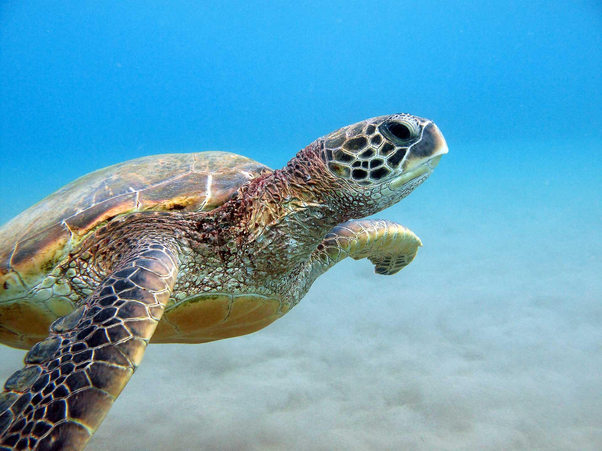 Maui Sea Life Photography