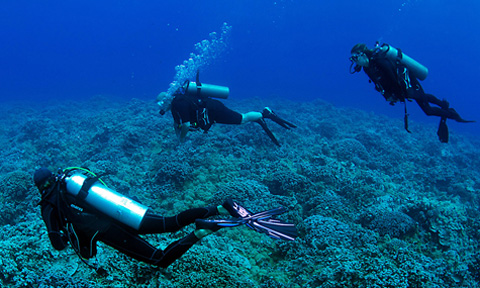 Maui Scuba Diving Private Tours