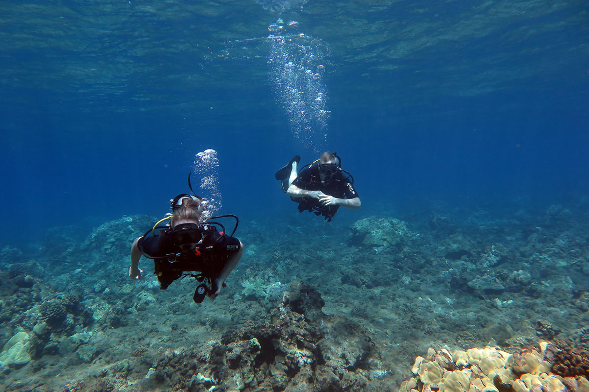 Wailea Point reef dive