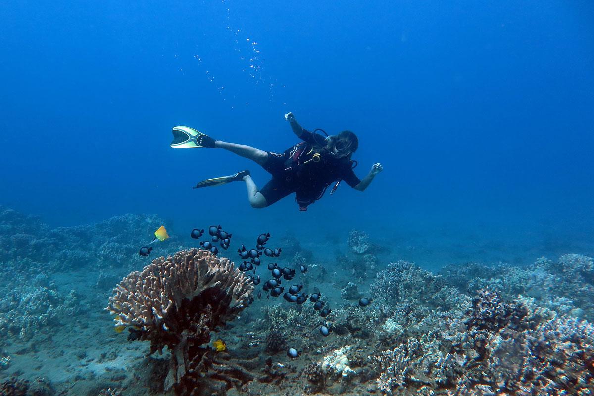 maui-reef-dive