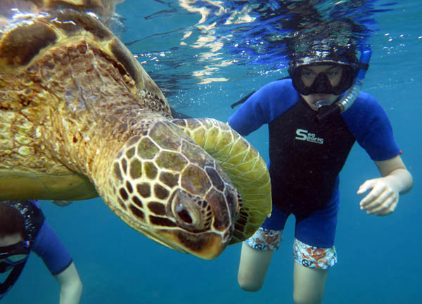 Private Maui Snorkel Tours