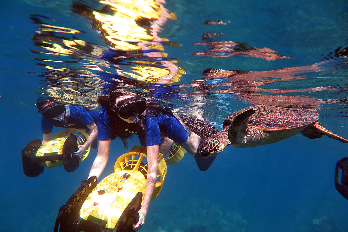 Kids and turtle snorkel adventure