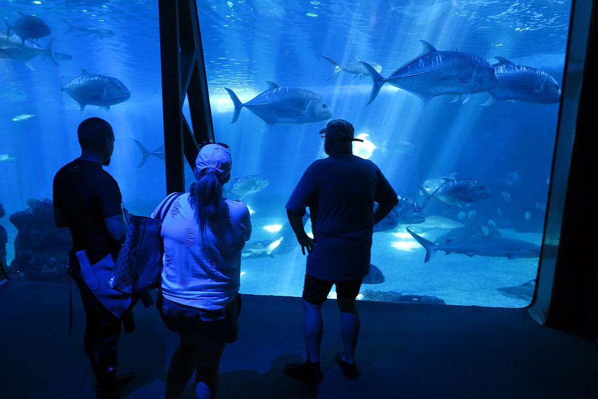 Maui shark diving aquarium