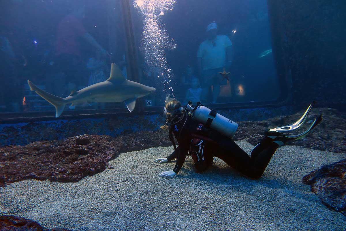 shark-dive-maui-sandbar