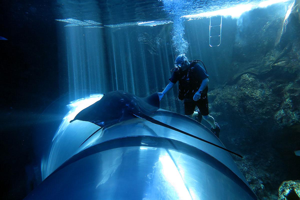 stingray-diver