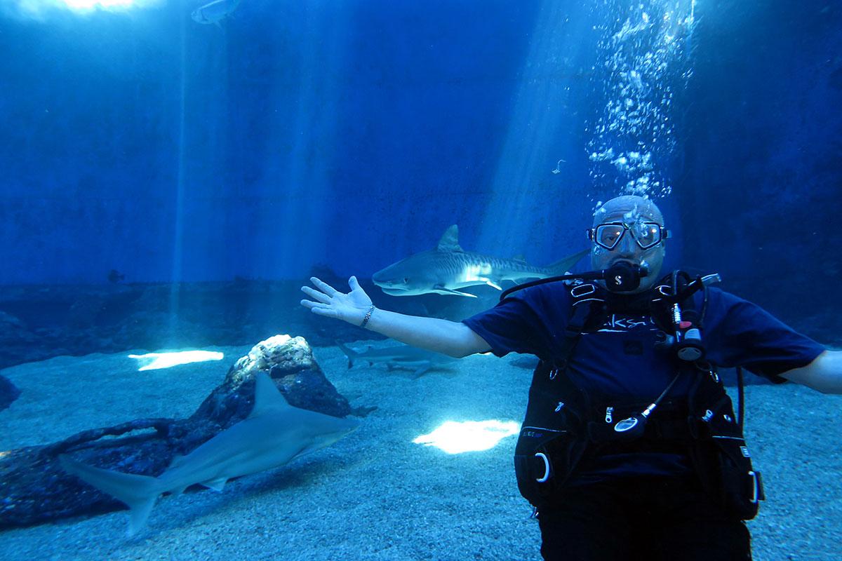 Tiger sharks in Hawaii